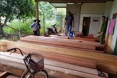 Vụ phá rừng quy mô lớn tại Đắk Lắk: Phát hiện thêm 500m3 gỗ
