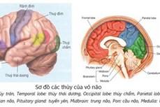 Bệnh mất trí nhớ có sự khác biệt theo giới