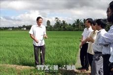 Sóc Trăng chuyển đổi cơ cấu cây trồng hướng phát huy thế mạnh địa phương