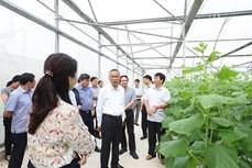 Hà Nội - Hà Nam hợp tác sản xuất tiêu thụ nông sản an toàn