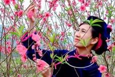 Lễ hội hoa Đào Xứ Lạng Xuân Canh Tý năm 2020: Tinh hoa hội tụ, lan tỏa sắc xuân