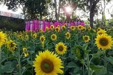 Mô hình du lịch nông nghiệp đầu tiên tại Gia Lai hút khách tham quan dịp Tết