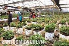 Du lịch canh nông ở Kon Plông - hướng đi đã mở
