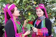 """Lễ hội """"Trà hoa vàng – Danh trà đất Việt"""" sẽ diễn ra vào cuối tháng 2/2020"""