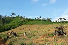 Đắk Lắk phát hiện, xử lý nhiều vụ phá rừng dịp Tết Canh Tý