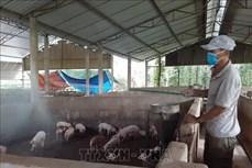 Quảng Ninh khuyến cáo không mua giống trôi nổi khi tái đàn lợn
