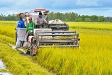 Mô hình canh tác lúa thông minh cho hiệu quả kinh tế cao của nông dân xã Lình Huỳnh
