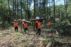 Mở hướng thoát nghèo nhờ trồng rừng gỗ lớn ở Bắc Trà My