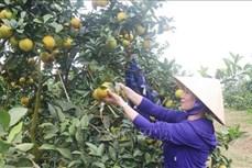 Nghệ An phát triển các mô hình trồng rau, củ hiệu quả