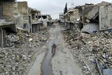 越南与联合国:越南支持寻求政治措施解决叙利亚问题