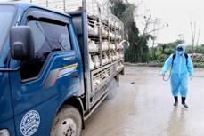 Chợ đầu mối gia cầm Hà Vĩ chủ động phòng, chống dịch cúm gia cầm