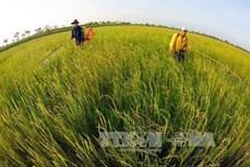 Nhân rộng mô hình sản xuất lúa sử dụng phân bón thông minh ở huyện Tháp Mười
