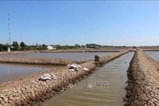 Nuôi artemia - Hướng làm kinh tế mới của người dân xứ biển Vĩnh Châu