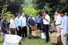 Bước tiến mới trong xây dựng các mô hình nông nghiệp hữu cơ ở Lào Cai