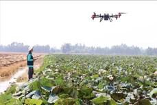 Hiệu quả từ phun thuốc bảo vệ thực vật bằng thiết bị bay không người lái