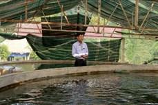 Làm giàu nhờ mô hình nuôi cá hồi trên đỉnh núi Pù Rinh
