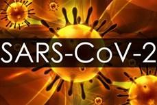Pháp thử nghiệm vaccine chống virus SARS-CoV-2 trên chuột