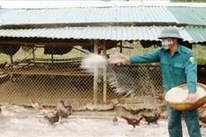 Thủ tướng Chính phủ chỉ thị triển khai quyết liệt các giải pháp phòng, chống dịch bệnh gia súc, gia cầm