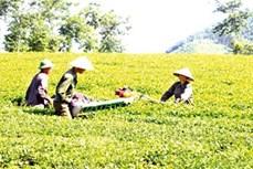 Tạo động lực để Phú Thọ vươn lên hàng đầu ở Trung du và miền núi Bắc Bộ