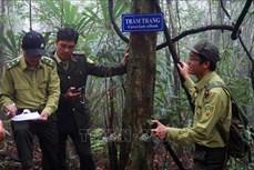 Năm 2020 sẽ hoàn thành việc cắm mốc giới lâm phận với rừng đặc dụng, phòng hộ