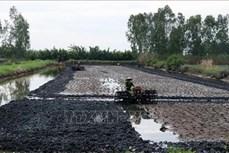 Một số mô hình sản xuất nông nghiệp thích ứng với hạn mặn