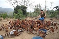 Dân vận khéo góp phần phát triển kinh tế ở huyện miền núi Văn Yên