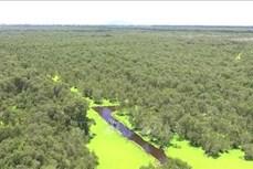 Quản lý bền vững Khu bảo vệ cảnh quan rừng tràm Trà Sư