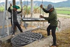 Đắk Lắk: Hướng đi mới giúp nông dân thoát nghèo trên vùng đất khó