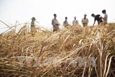 绿色气候基金向越南提供3020万美元无偿援助增强应对气候变化能力