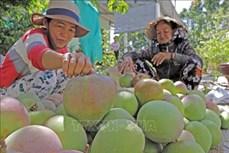 Chuyển đổi cây trồng gắn với ứng dụng công nghệ cao ở Bình Thuận