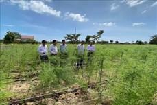 Ngành nông nghiệp: Tái cơ cấu để thích ứng