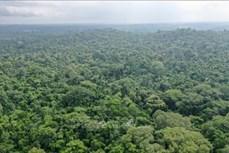 Phục hồi đất giúp hấp thụ hàng tỷ tấn CO2