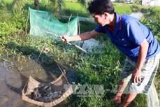 Kiên Giang khôi phục nguồn lợi cá đồng vùng U Minh Thượng