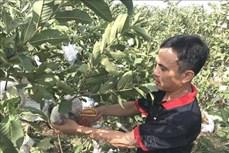 Quảng Trị hướng nông dân chuyển đổi cây trồng ở nơi thiếu nước