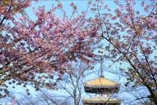Vũ Hán- Mùa Xuân lại về