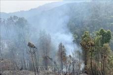 Gian nan phòng, chống cháy rừng trong mùa khô ở Sơn La