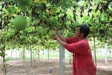 Trà Vinh: Hỗ trợ vốn vay ưu đãi cho hợp tác xã phát triển sản xuất