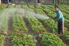Chuyển đổi cây trồng thích nghi với thời tiết ở Trà Vinh