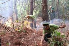 Gia Lai: Chung tay phòng chống cháy rừng mùa khô hạn