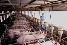 """Dịch COVID-19: Giảm giá thịt lợn ở mức hợp lý, xử lý nghiêm việc """"găm hàng"""""""