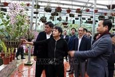Lai Châu thúc đẩy lợi thế phát triển hoa, cây cảnh, cây dược liệu, nông nghiệp hữu cơ