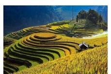 Du lịch Việt Nam: Phát triển du lịch cộng đồng - Hướng đi mới của huyện vùng cao Mù Cang Chải