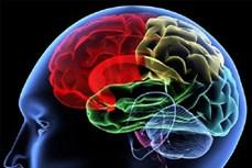 Phương pháp mới khơi gợi trí nhớ trong điều trị người bị tổn thương não bộ