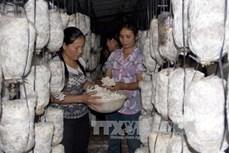 Bắc Giang phát triển mạnh nông nghiệp ứng dụng công nghệ cao