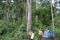 Huyện biên giới Ia H'Drai nỗ lực bảo vệ rừng trong tháng cao điểm khô hạn