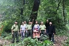 Công bố hiện trạng rừng toàn quốc năm 2019