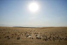 Miền Tây nước Mỹ trải qua thời kỳ khô hạn nhất trong hơn 1.000 năm qua