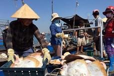 越南努力保护与有效开发水产资源