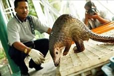Giới chuyên gia cảnh báo nguy cơ các đại dịch xuất phát từ động vật