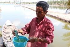 Huyện U Minh Thượng: Người nuôi tôm có thu nhập ổn định nhờ xen canh